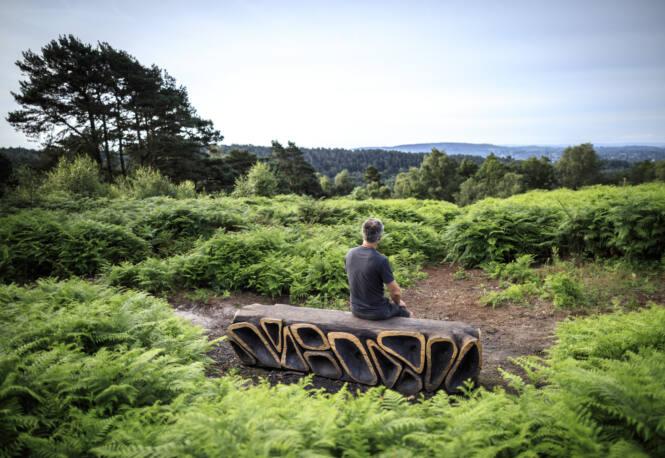 Xylem by Walter Bailey Photo: John Miller