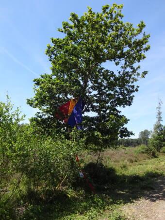Farnham Kites -Sian Highwood
