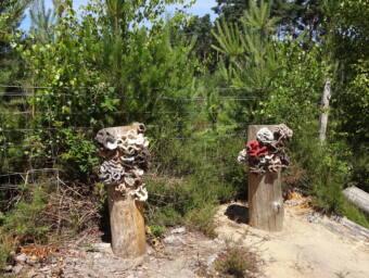 Funghi Fanfare-Tracy D-J & Susan Blandford