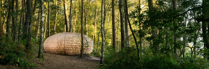 Sculptural installation in forest setting