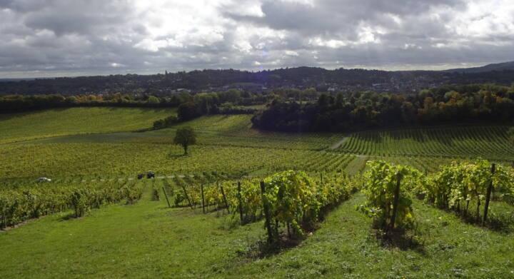View from Radius