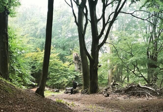 Hascombe path